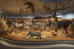 Muzeum Przyrodnicze UŁ
