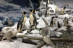 5_ULodzki_Antarktyka_IMG_4905