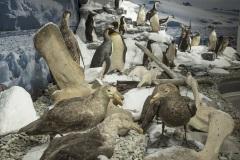 5_ULodzki_Antarktyka_MP75032