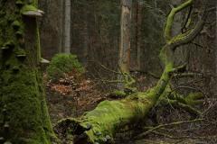 Las_Martwe_drzewo_MP3_8137