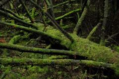 Las_Martwe_drzewo_PM6_3245