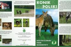 Folder_RPN_Konik_polski