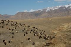 Kirgizja_PM_8216